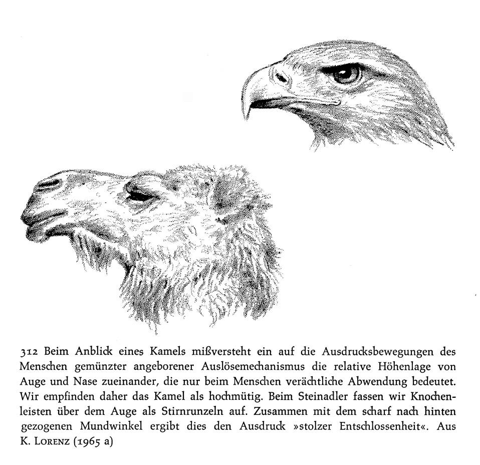 Gemütlich Anatomie Der Stirn Fotos - Anatomie Von Menschlichen ...